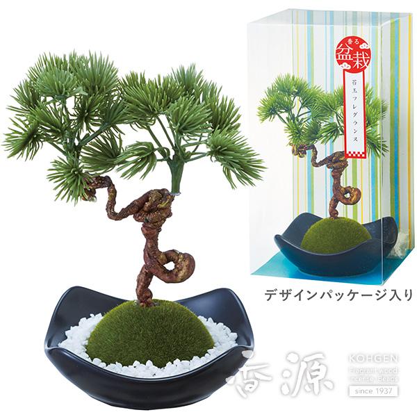 カメヤマ 苔玉フレグランス 松 松緑の香り
